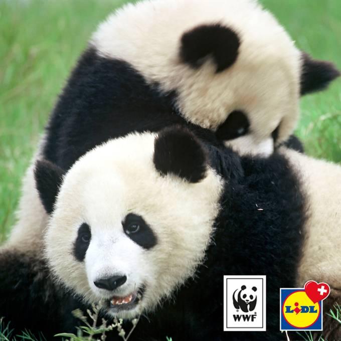 Partnerschaft WWF Pandas